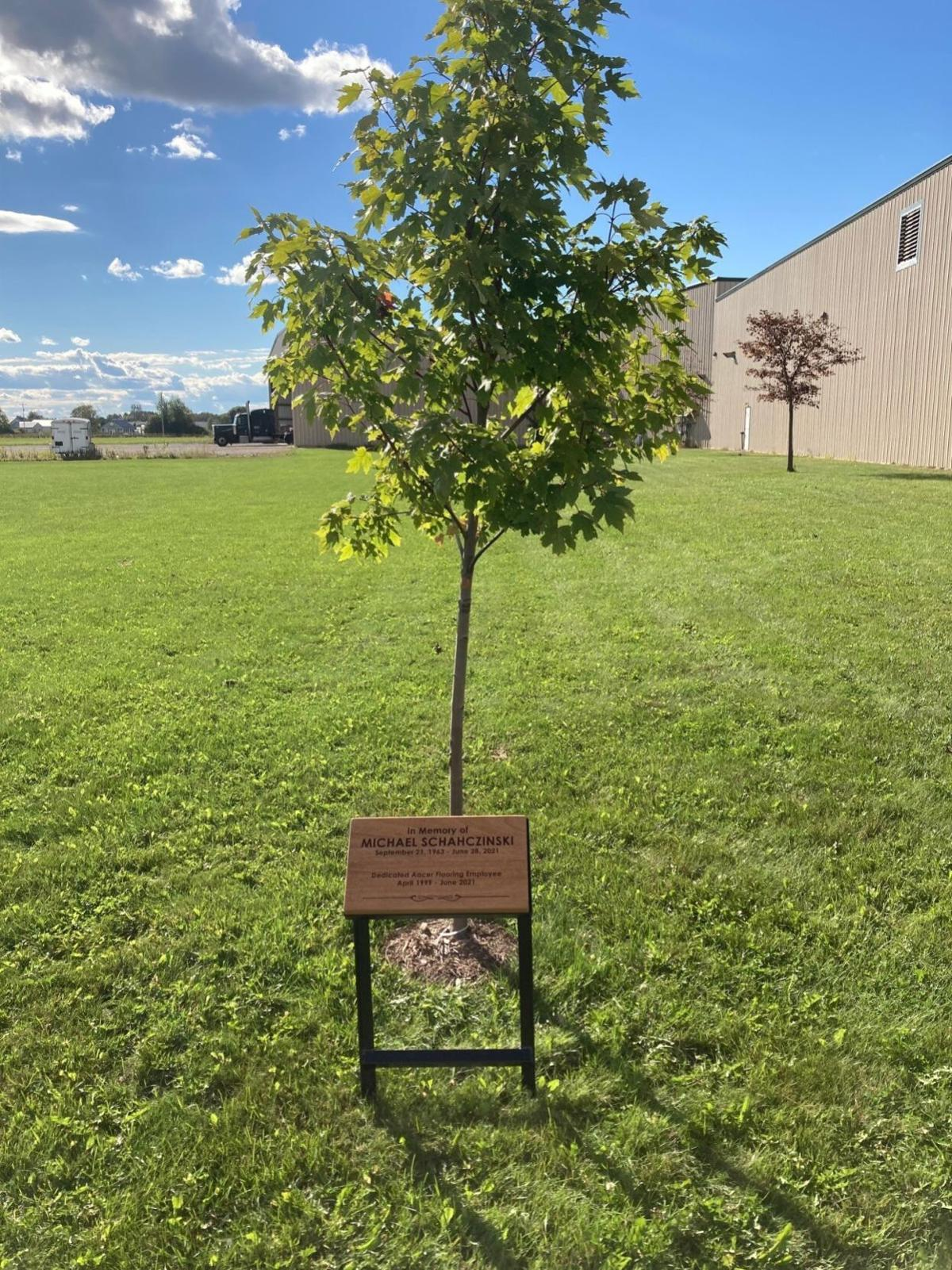 Tree planted with plaque in memory of Michael Schahczinski