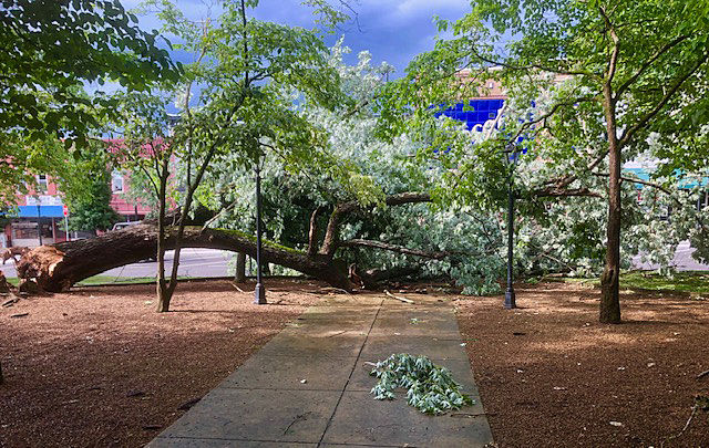 Downed Trees 01 - Courthouse --.jpg