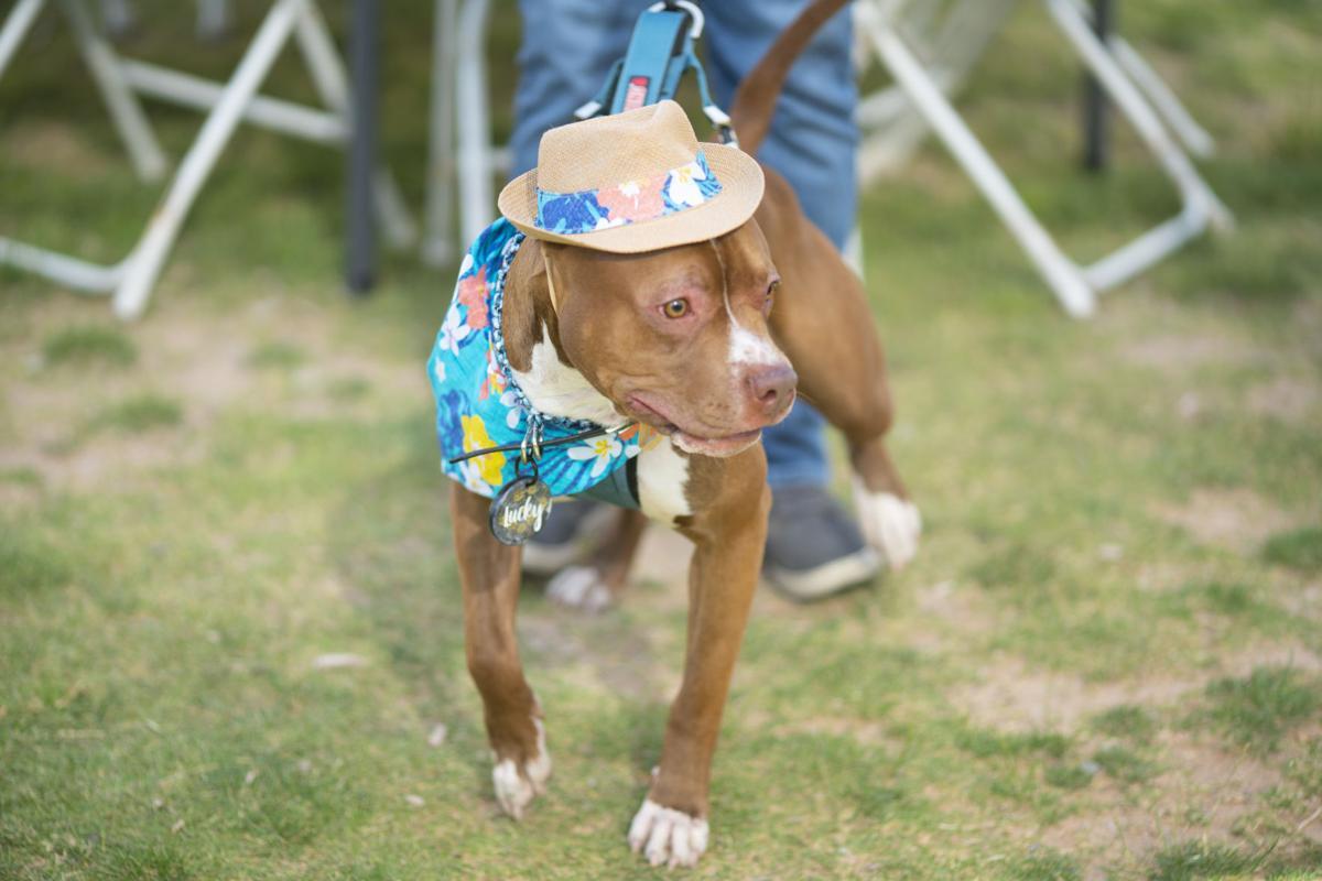 El Paso Inc.'s Best Pet pachanga