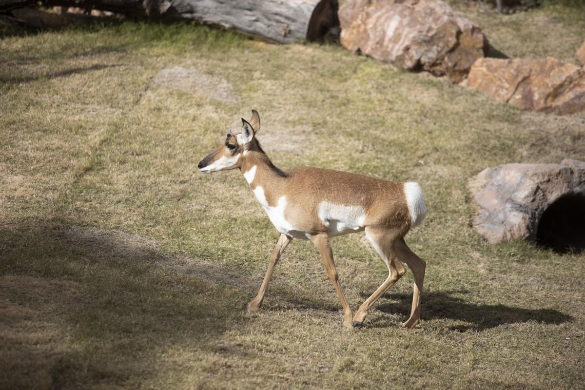 Chihuahuan Desert Opens At El Paso Zoo