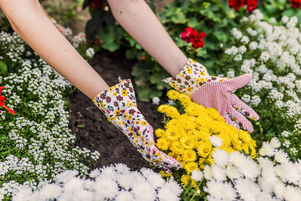 young woman planting flowers in her garden. young woman gardener care of flowers in the garden. Girl pulling out the weeds in flowerbed. People, gardening, care of flowers, hobby concept