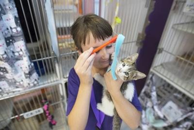 Looking for a pet? Here's where to find your pick