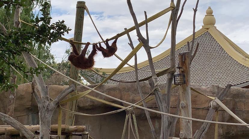 El Paso Zoo. Ibu khaleesi.jpg