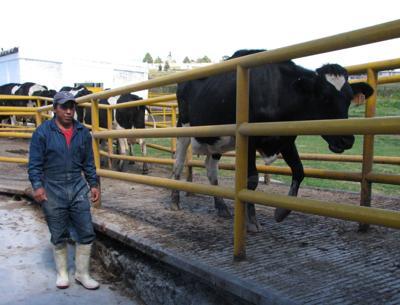 Trabajadores de lecherías