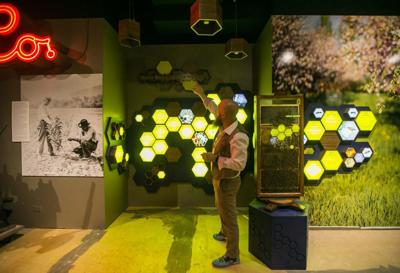 Nueva exhibición de abejas