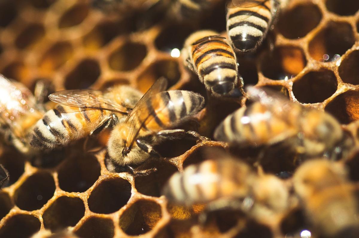 Su labor es vital, abejas