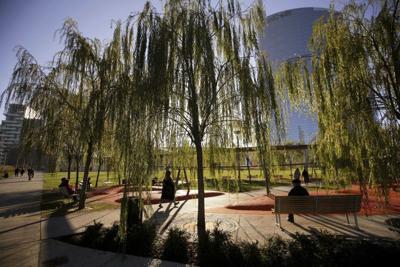 Un billón de árboles para combatir el cambio climático