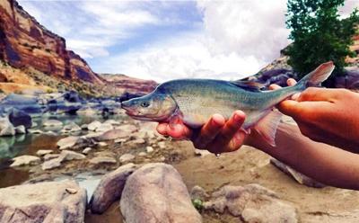 Una rara especie de pez queda fuera de la lista de animales en peligro de extinción