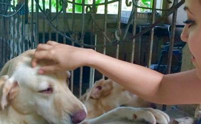 Beatriz Rosselló promueve la adopción de mascotas en albergues