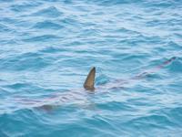 Joven es mordido por tiburón en Florida