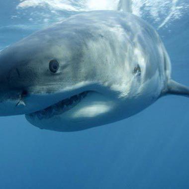 Joven de 15 años muere por ataque de tiburón