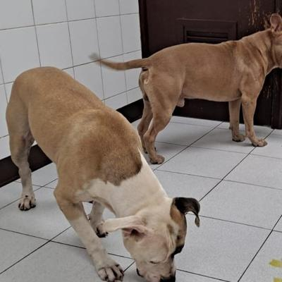 Policía salva a dos perros que se encontraban abandonados en la PR-22