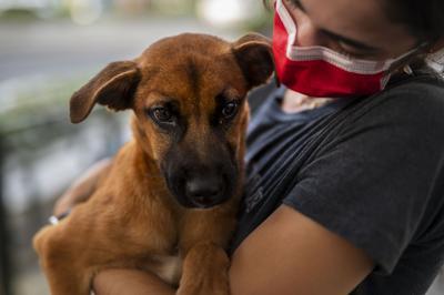 Altruismo canino en The Mall of San Juan