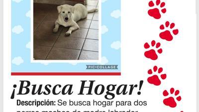 Mascotas para adopción en septiembre