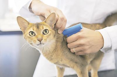 Microchip para perros y gatos, para qué sirve y cómo funciona