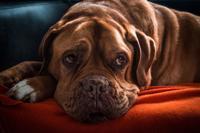 Alimentos de temporada que perjudican la salud de los perros