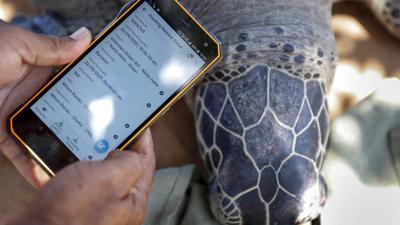 Una tortuga que nació con dos cabezas en Estados Unidos cumple dos semanas de vida
