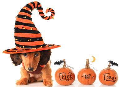 Proteja a sus mascotas en Halloween