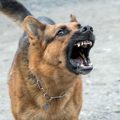 Manada de perros destroza carro