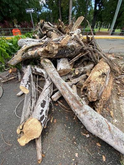 Denuncian tala de árboles en UPR Río Piedras