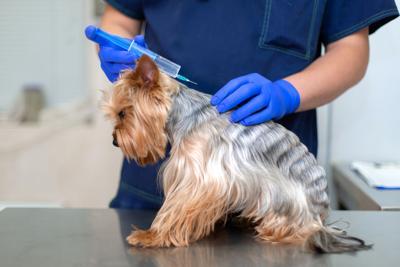 Rusia elabora vacuna de covid-19 para animales