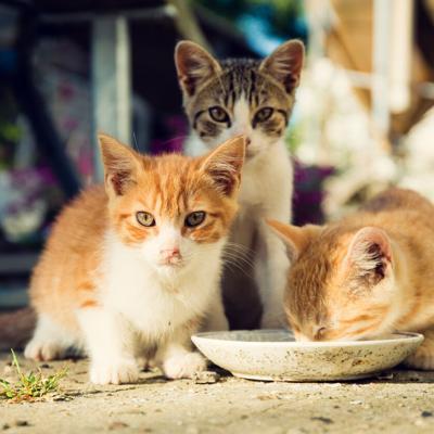 Los beneficios de tener una colonia de gatos en su comunidad