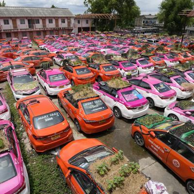 taxis con jardines