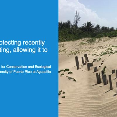 UPR Aguadilla construye sistema de dunas resistentes a huracanes