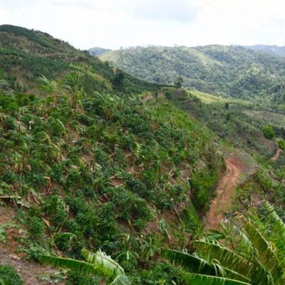 Más de $47 millones en pérdidas agrícolas tras paso de Isaías