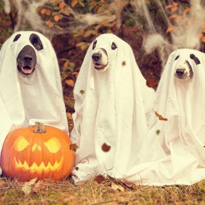 Fiestas de disfraces para mascotas por una buena causa