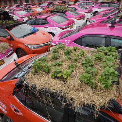 taxis con mini jardines Tailandia