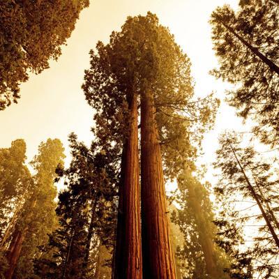 Dos incendios se dirigen al bosque de secuoyas en California