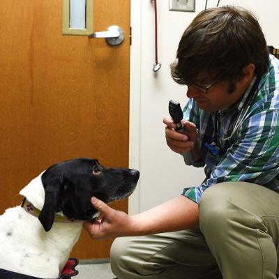 Condenan a más de 21 años de cárcel a veterinario que abusó sexualmente de varios perros en Florida