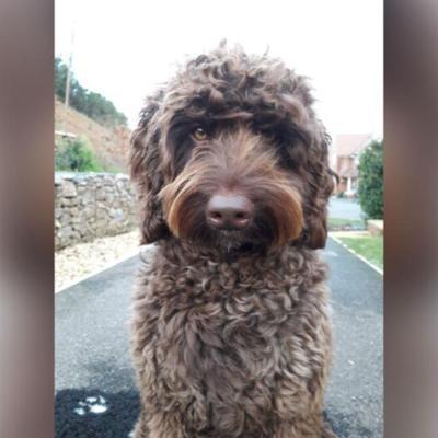 Un perrito de terapia evitó que una mujer se quitara la vida