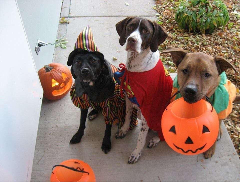 Consejos de seguridad para mascotas durante Halloween   Notimascotas    elvocero.com