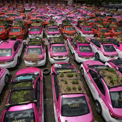"""Taxistas en Tailandia plantan """"jardines"""" en los techos de sus autos a modo de protesta"""