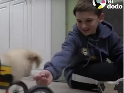 Niño crea silla de ruedas con LEGO para una perrita