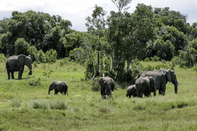 Presunto cazador muere pisoteado por elefantes