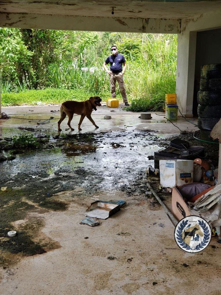Caso de maltrato animal en San Lorenzo