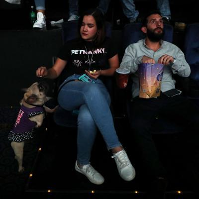 Mascotas se adueñan de las sala de cine