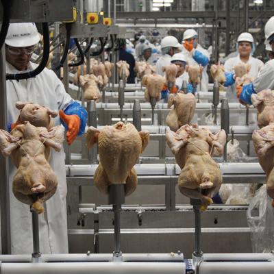El USDA replantea el control de la salmonela en las aves de corral