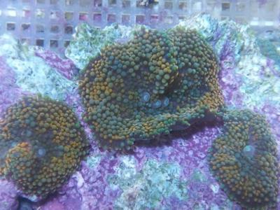 Se declara culpable por exportar ilegalmente especies marinas