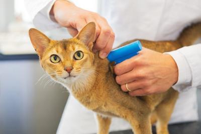Microchip para perros y gatos: ¿para qué sirve y cómo funciona?