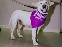 Merlot Lucky: el perro luchador