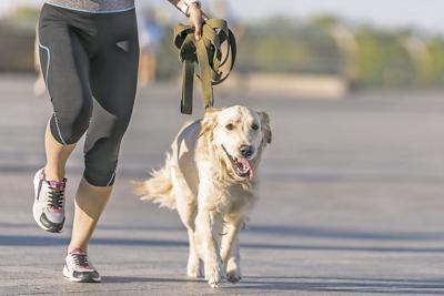 ¿Está tu mascota en sobrepeso?