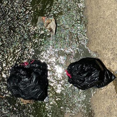 Hallan cadáveres de perros a orillas de río en Bayamón