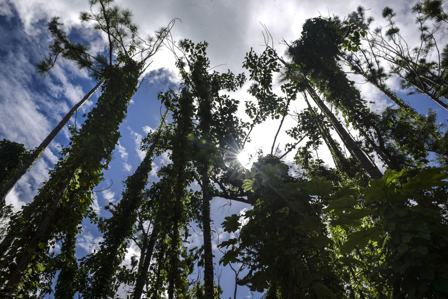 Impune los crímenes ambientales