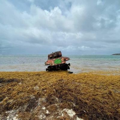 Alertan ante gran acumulación de sargazo en la playa Flamenco de Culebra