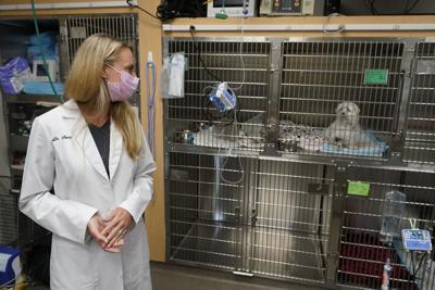 Furor por las mascotas en pandemia satura a los veterinarios