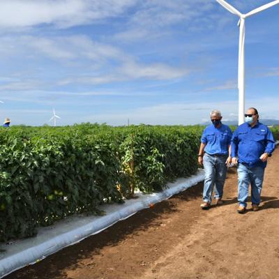 Escasez de mano de obra agrícola